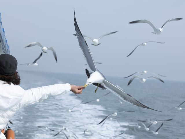Datingtrends en termen: wat is zeemeeuwen of zeemeeuw dating?